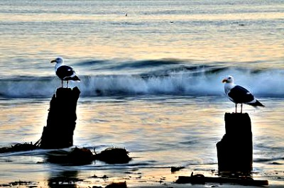 Capitola Beach seagulls on watch