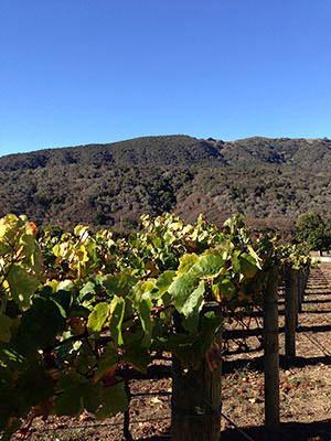 Carmel Valley Wineries offer award winning wines.