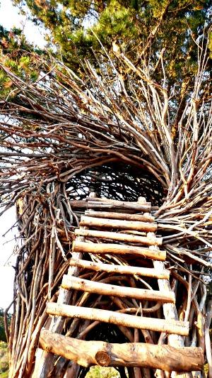 Climbing A Short Ladder Into The Nest