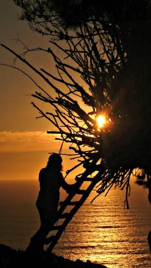 Treebones Nest At Sunset